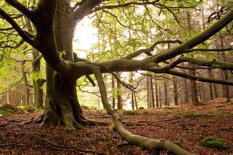 Forest of Bowland - Geographical Magazine