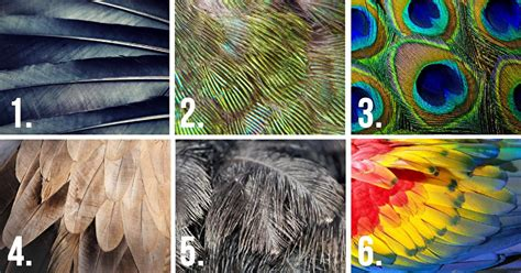 Choose A Feather And It Will Reveal Some Hidden Traits Of
