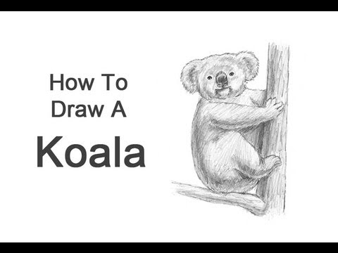 How to Draw a Bear - Realistic Bear Draiwng Step By Step
