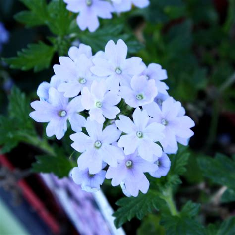 Bunch of White Flowers Picture | Free Photograph | Photos
