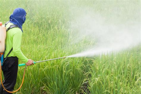 Quercetin protects against toxic effects of pesticides