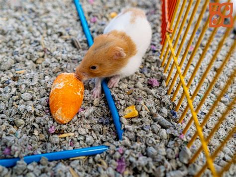 Puppies For Sale | Hamster life, Puppies, Fun facts