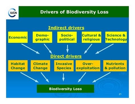 Ecosystem issues on a global scale - A-level Geography