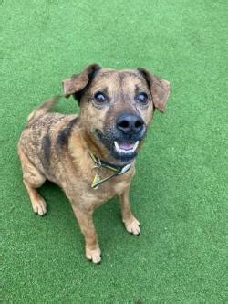 Rescue & Rehoming Dogs | Kenilworth (West Midlands) | Dogs
