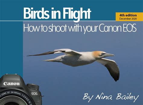 How to Shoot Birds in Flight with your Canon EOS camera by