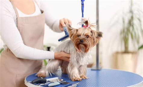 Choose Affordable Dog Groomer Near Me | petswithlove